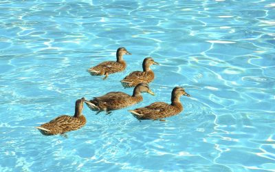 4 Actions You Can Take to Keep Birds Out of Your Pool